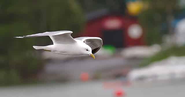 China plant Roboter-Vögel zur Überwachung einzusetzen