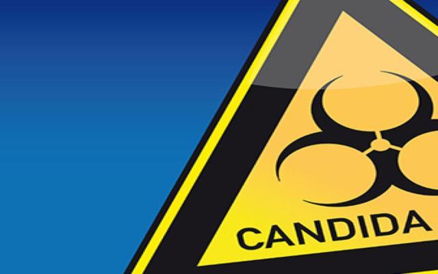 Unheimlicher Hefepilz Candida Auris bedroht Menschenleben
